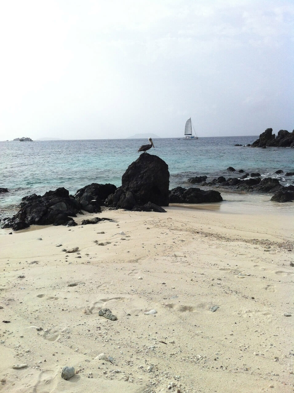 One of Our Beautiful St. John Beaches and Wildlife