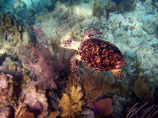 A St. John Sea Turtle